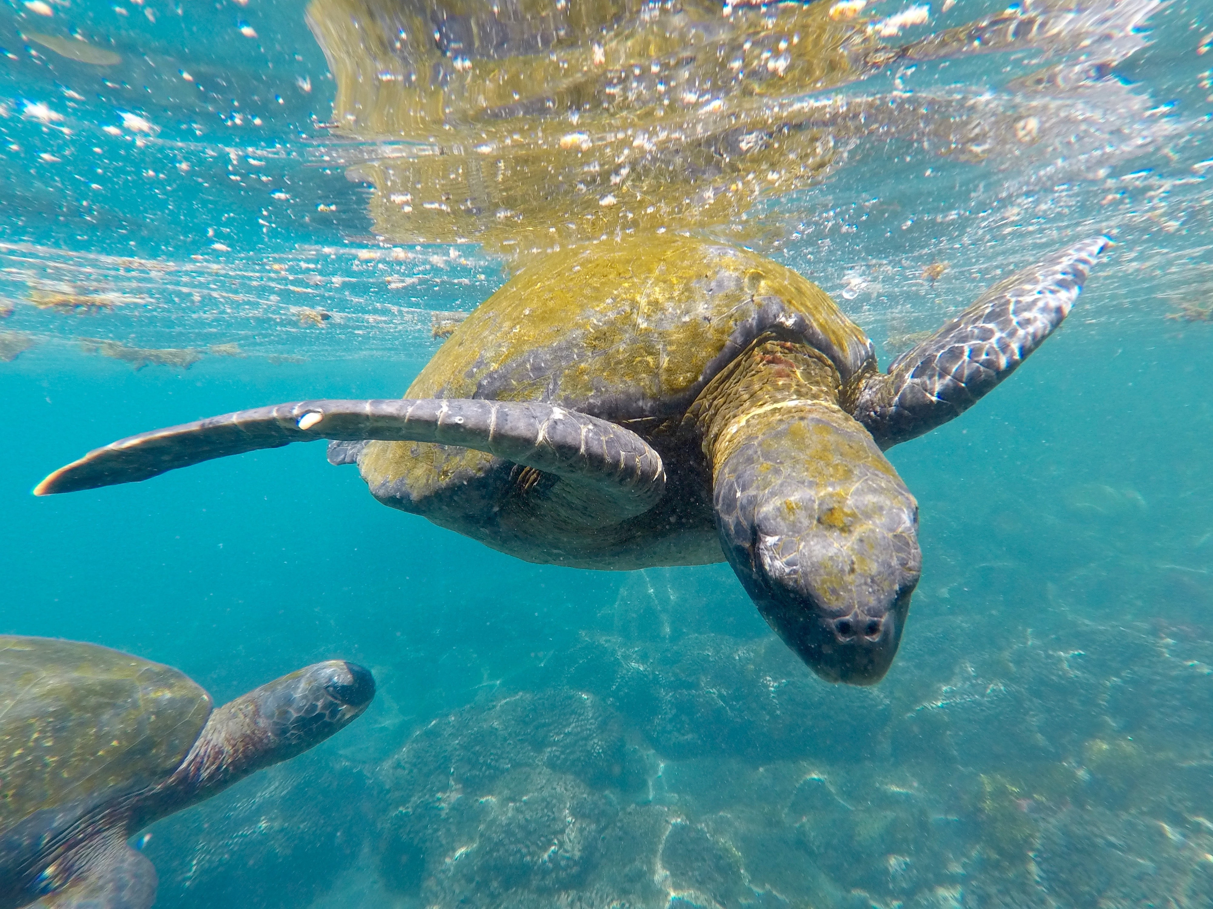 brown turtle under sea