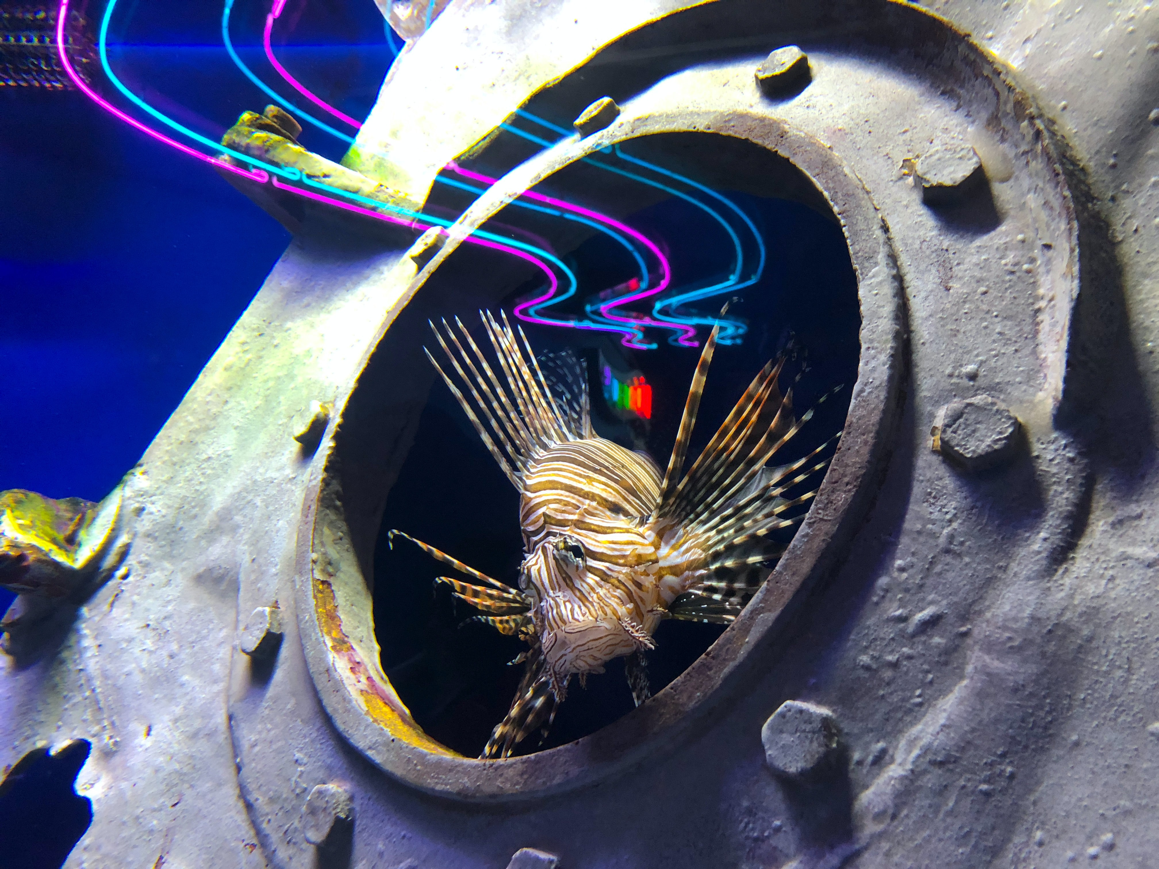beige lion fish near gray container