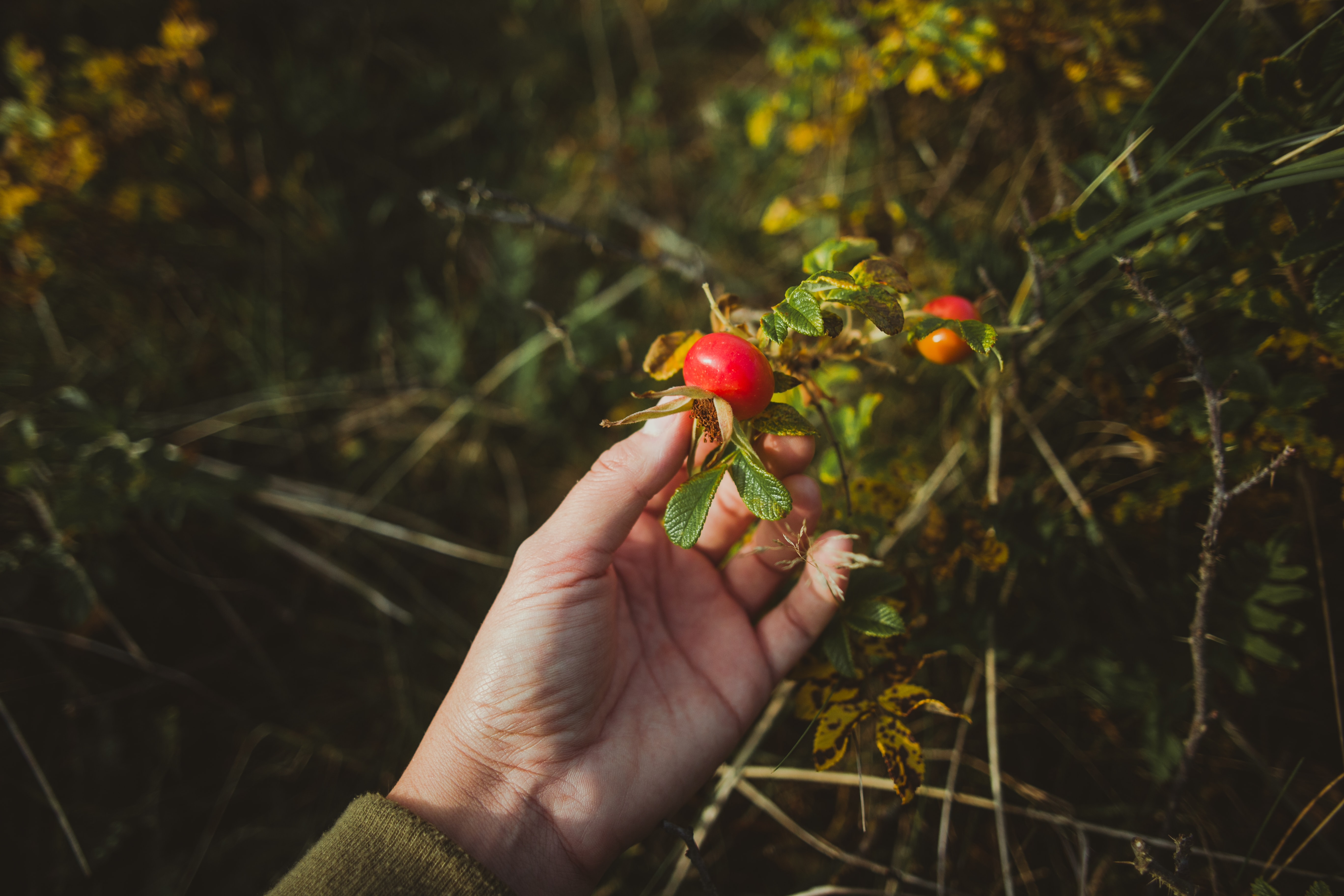 photo of person picking fruit