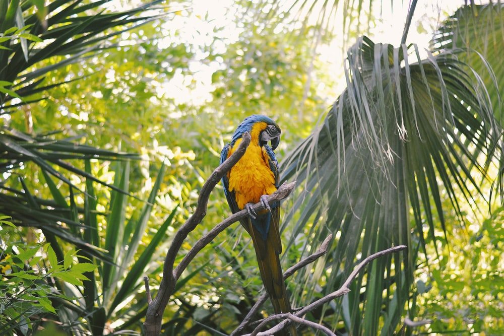 yellow and blue parrot on branch