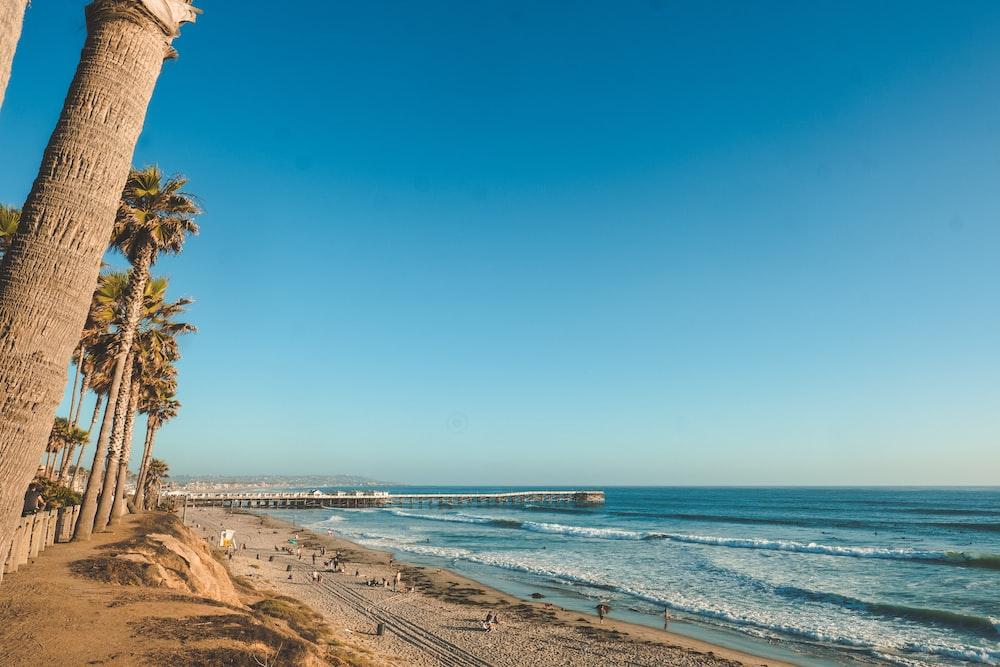palm tree on seashore near body of water