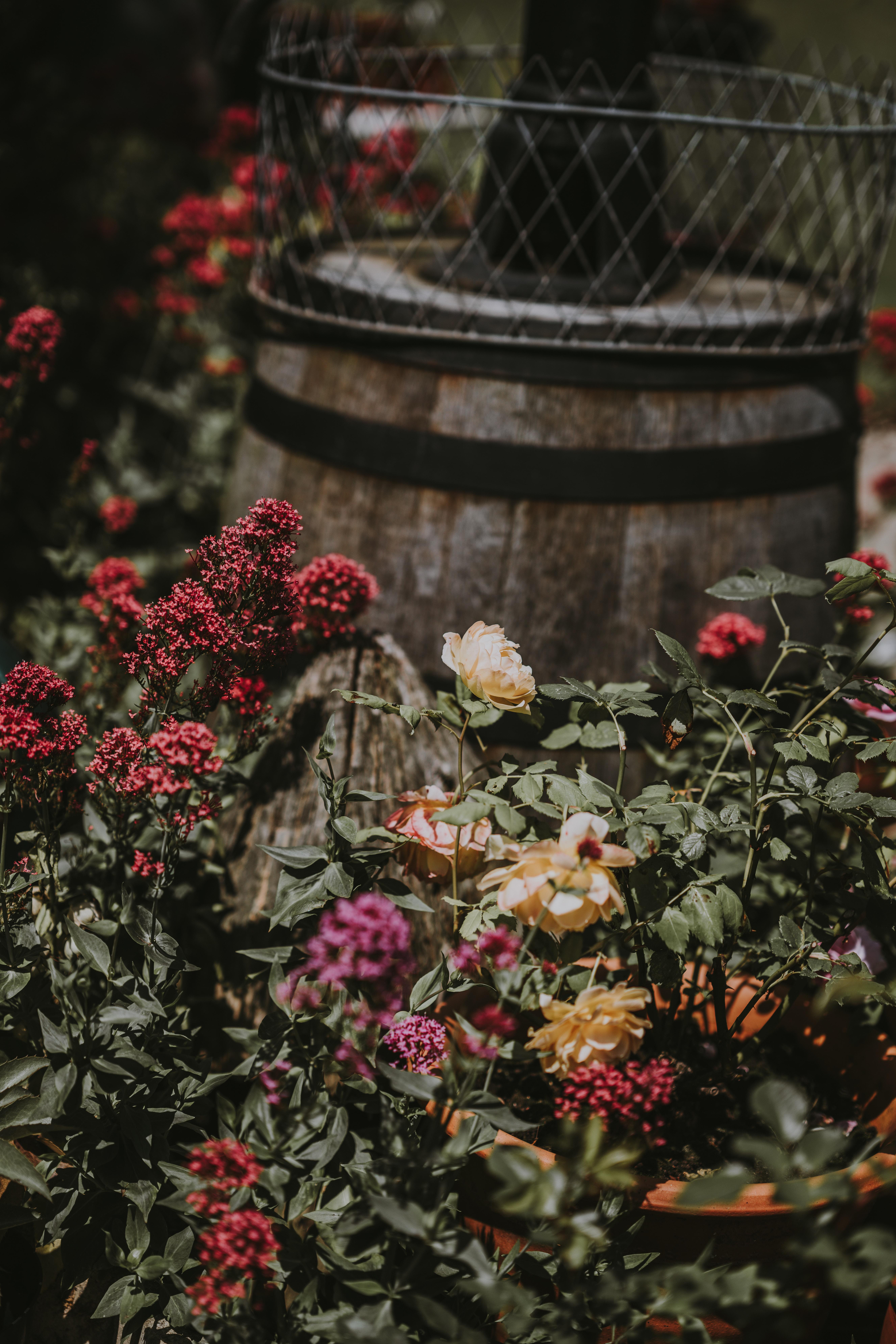 assorted-color garden of rose near barrel at daytime