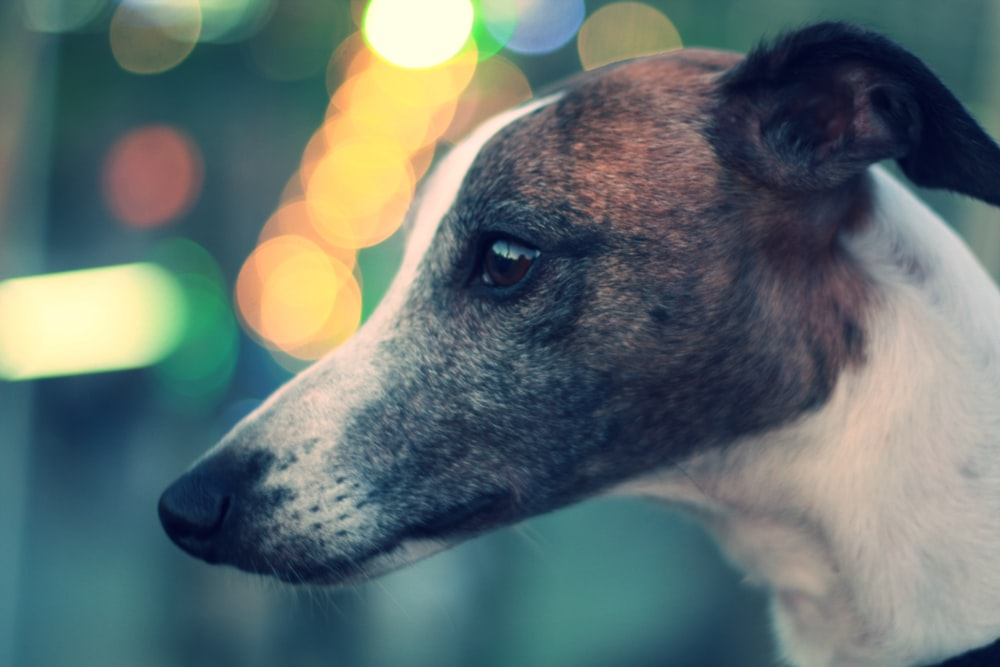 photo of brown and white dog
