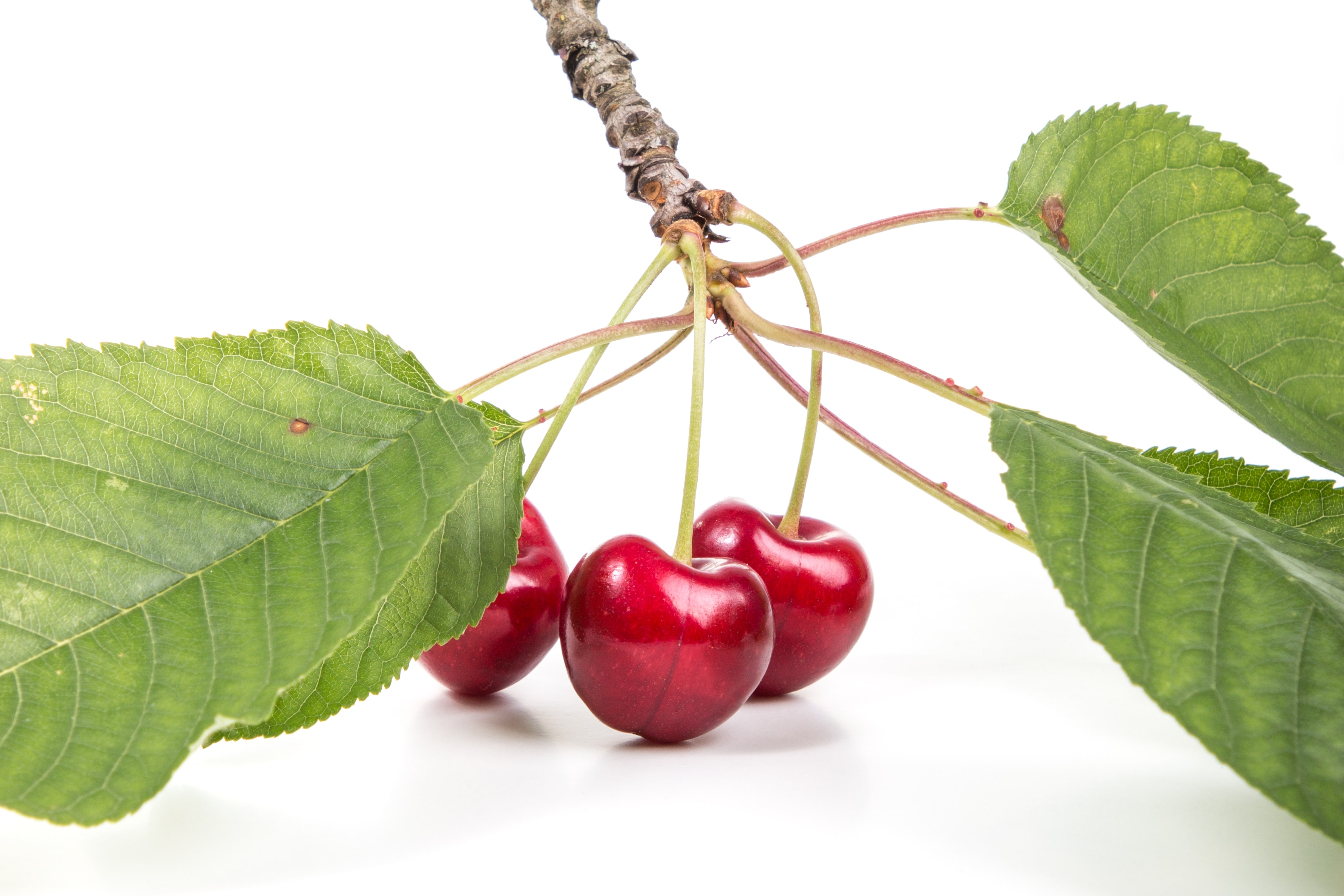 photo of red cherry fruit