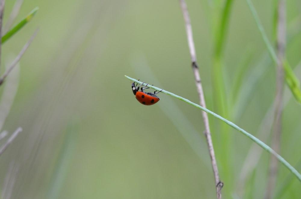 ladybug on green plant