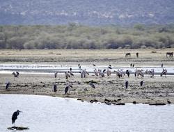 Fahrzeugübernahme - Fahrt in den Lake Manyara Nationalpark