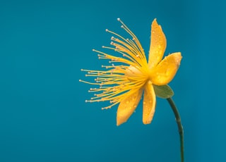 yellow and blue petaled flower