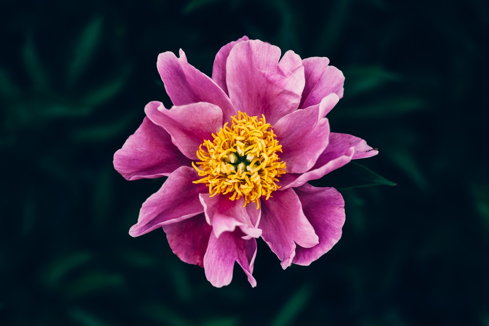 purple petaled flower in selective focus photography
