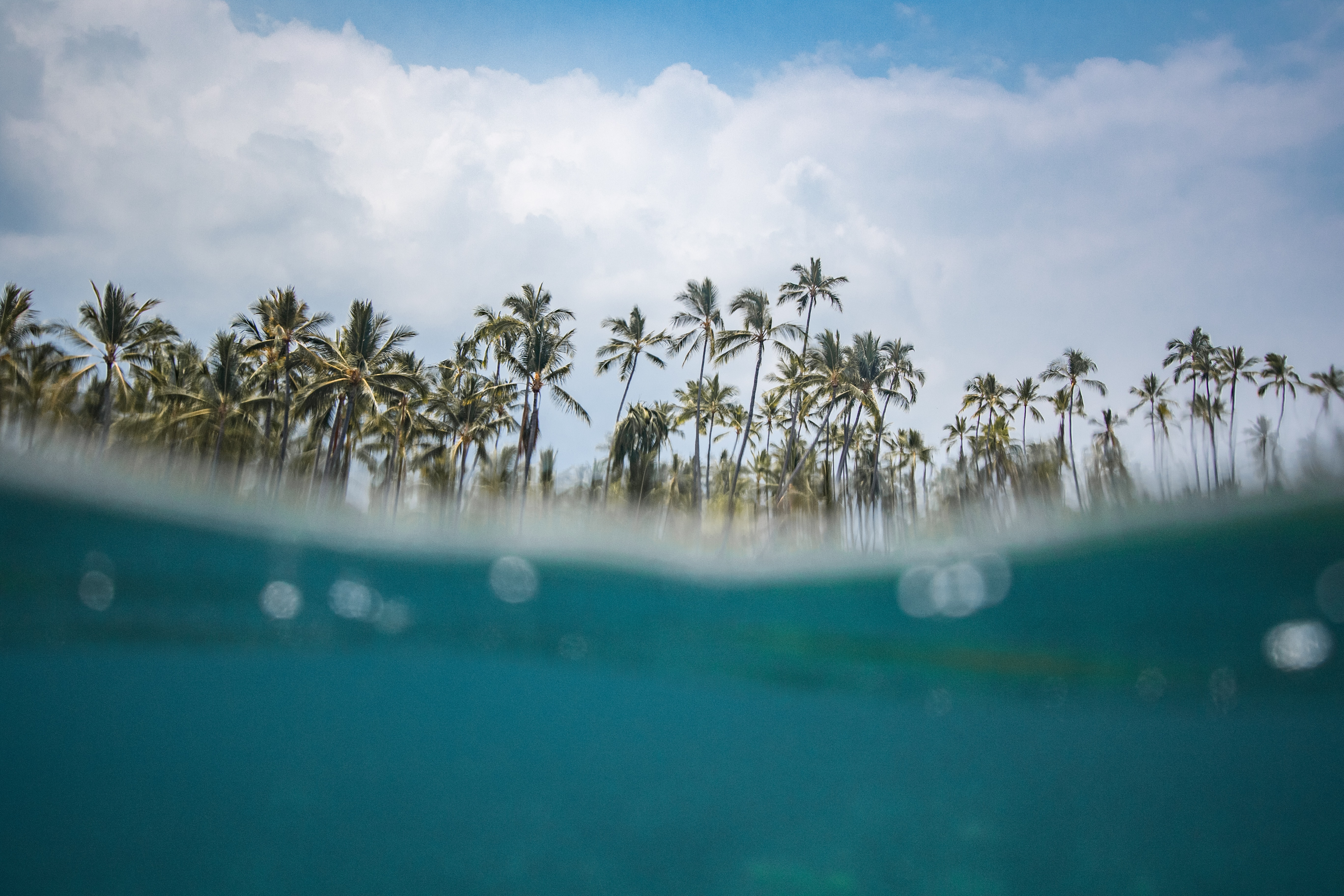 split photography of body of water and coconut trees