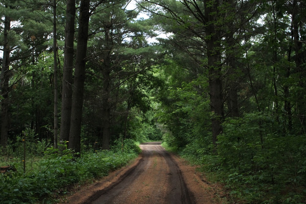 brown road in middle of forest