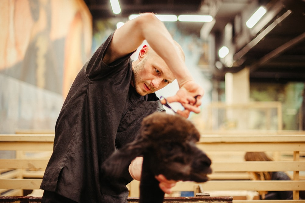 man cutting hair of goat