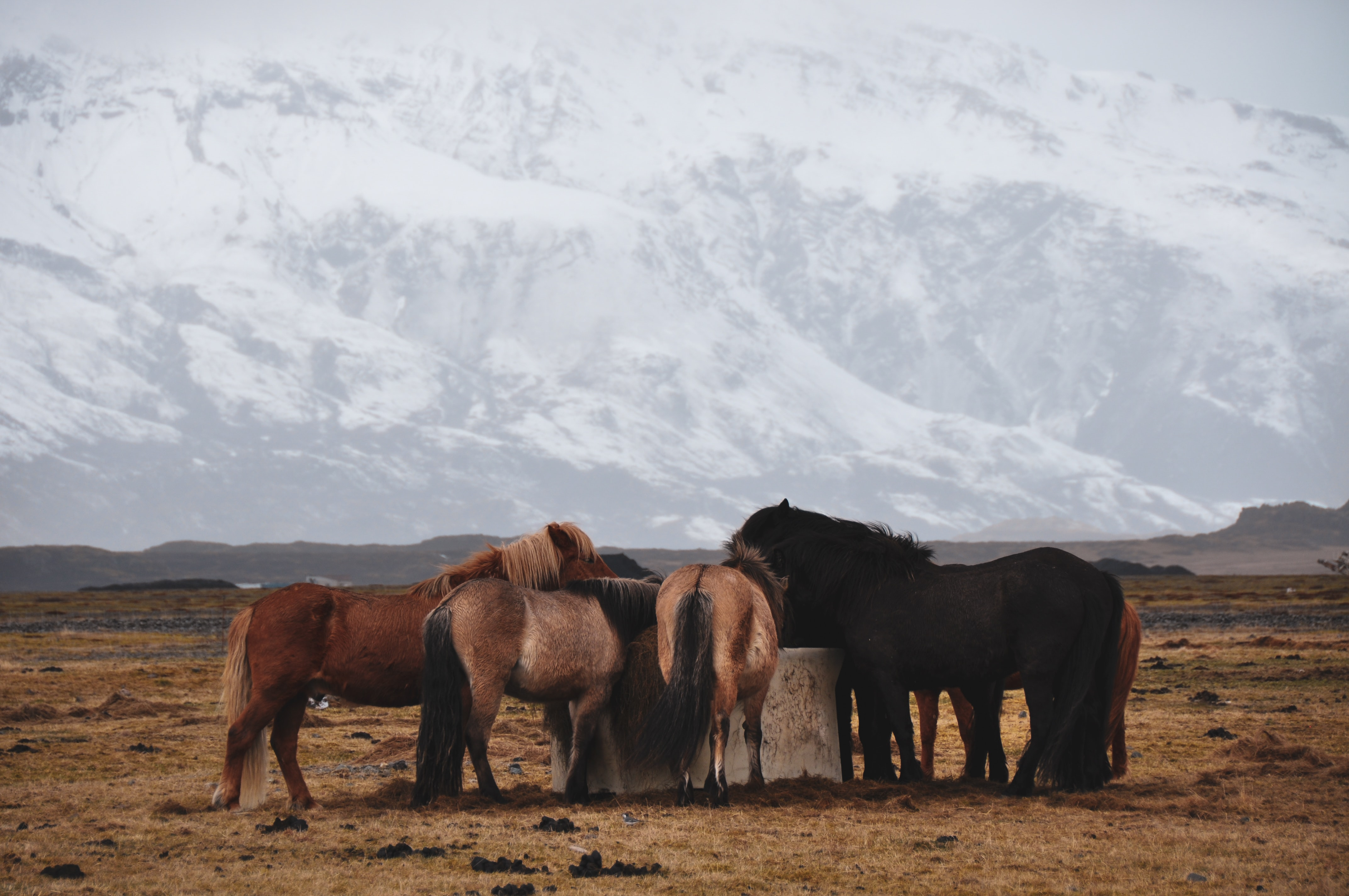 group of horses drinking from water well
