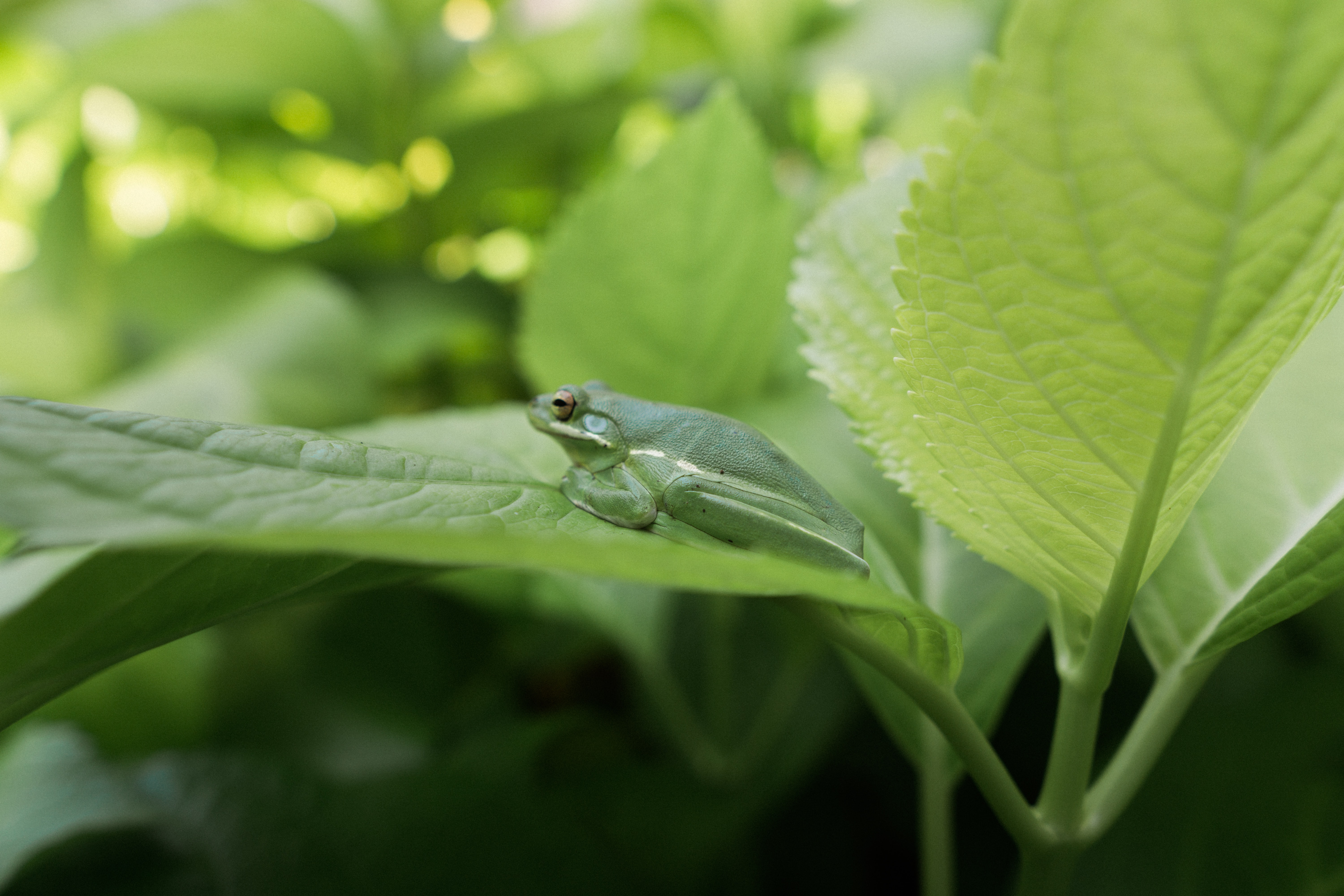 closeup photo of green frog on leaf