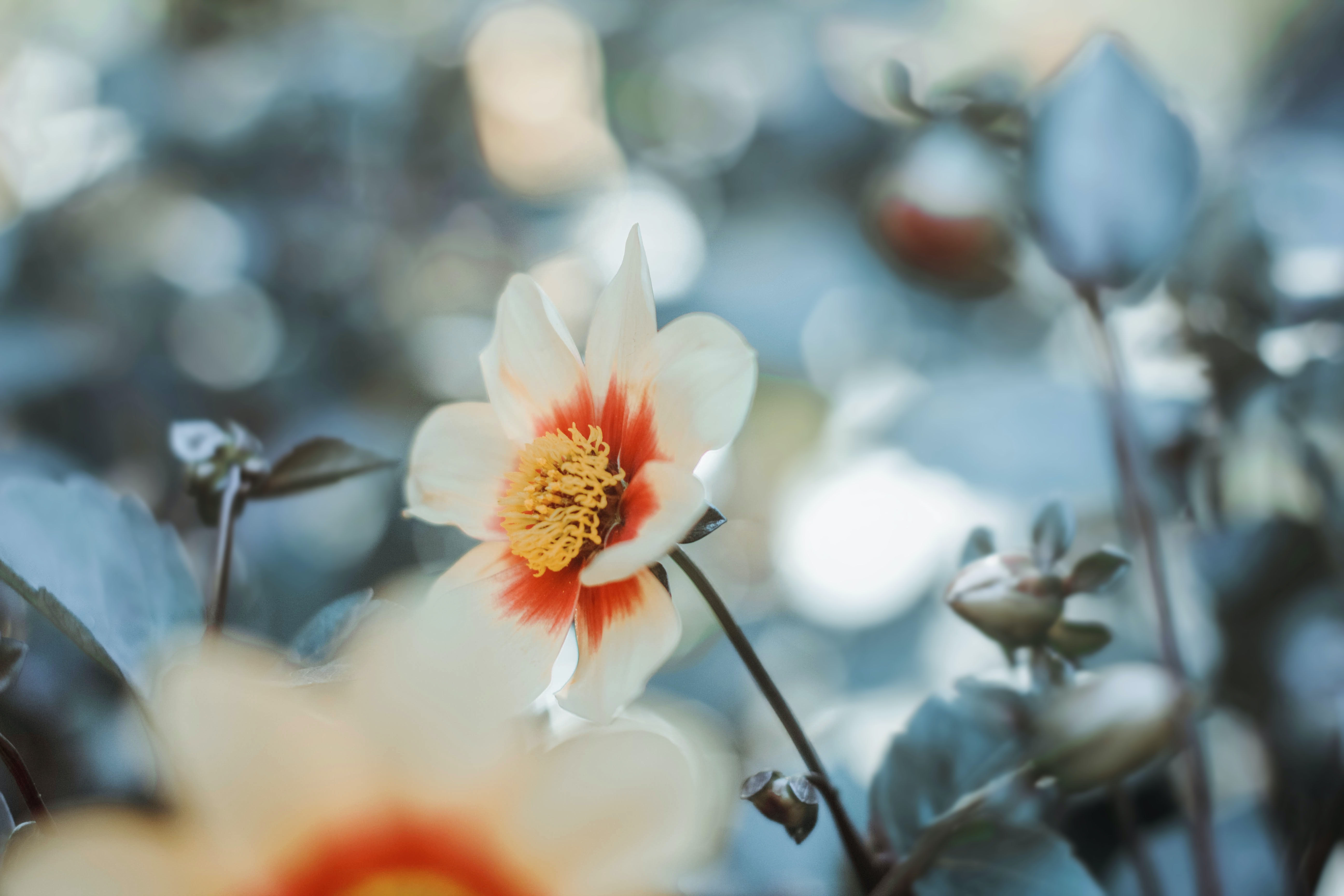 depth of field photo of white and red flower