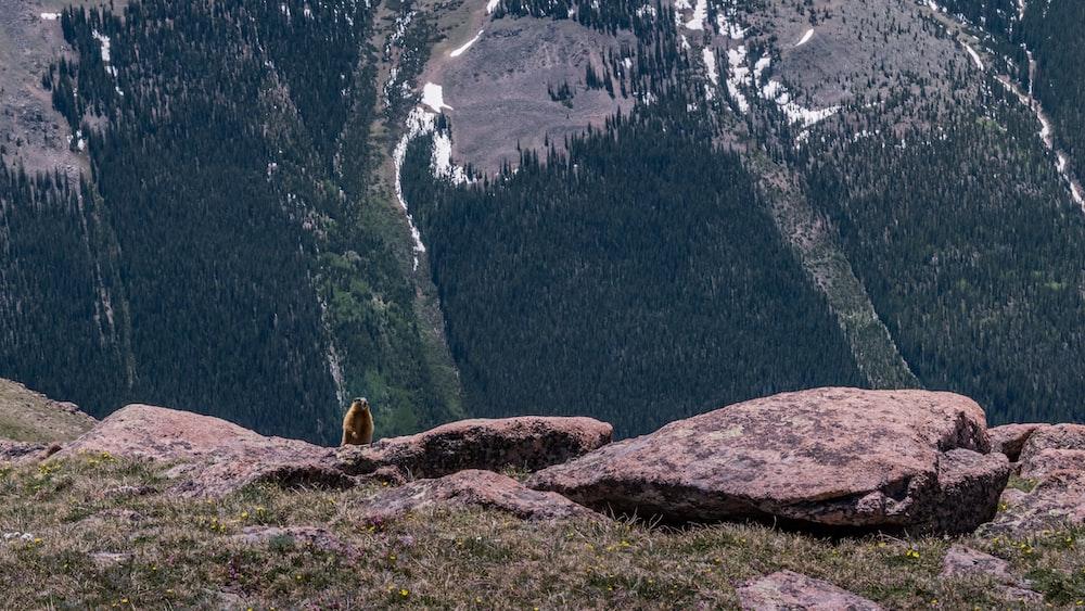 yellow bird on stone