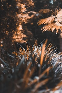 tilt shift lens photography of brown plants and tree