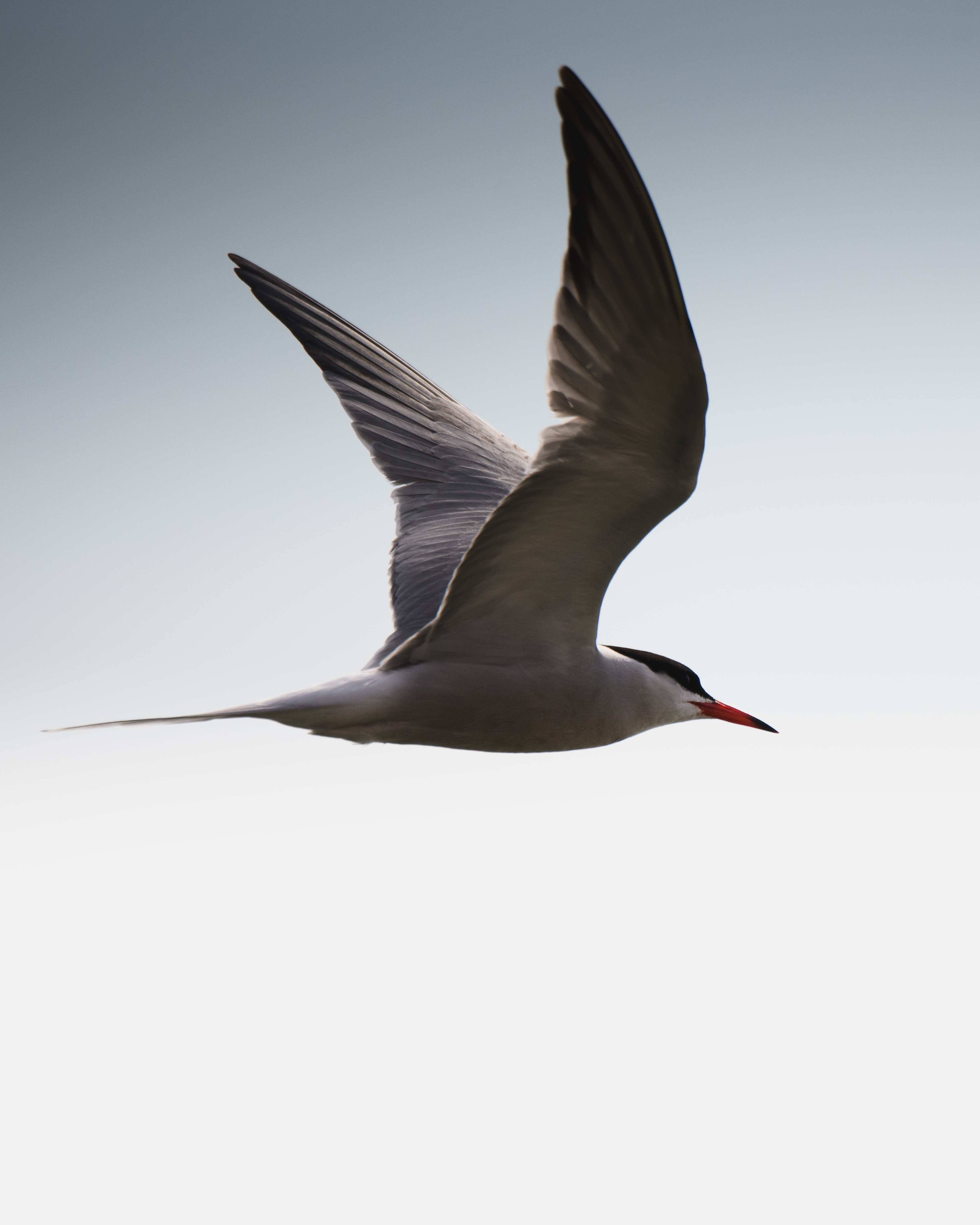 photography of white and gray flying bird