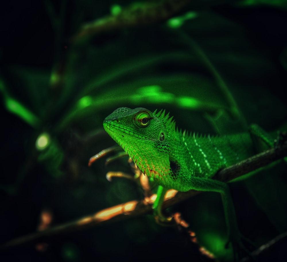 photo of green lizard