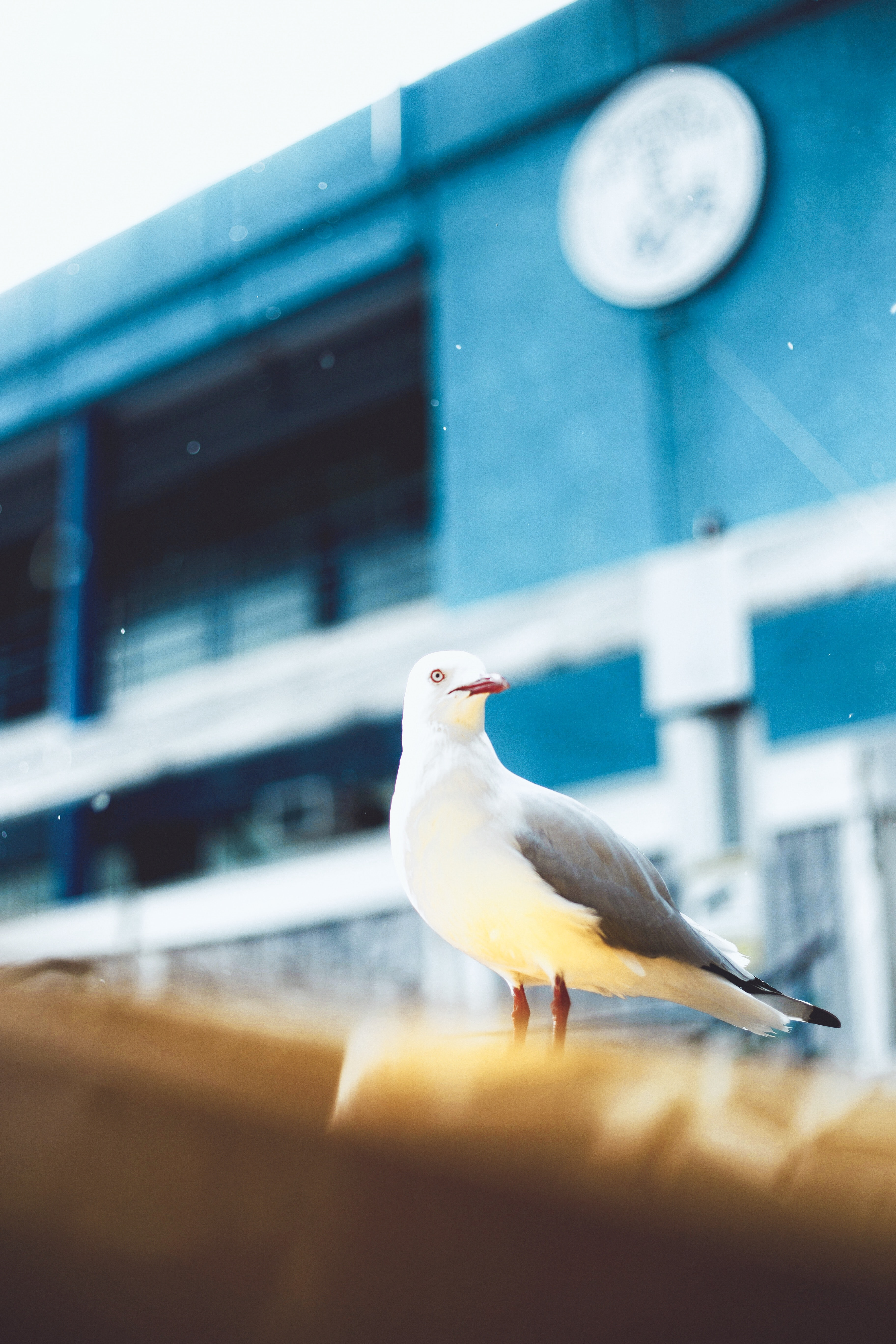 close up photograph of seagull near building