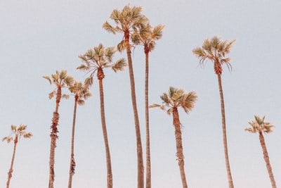 palm trees pastel zoom background