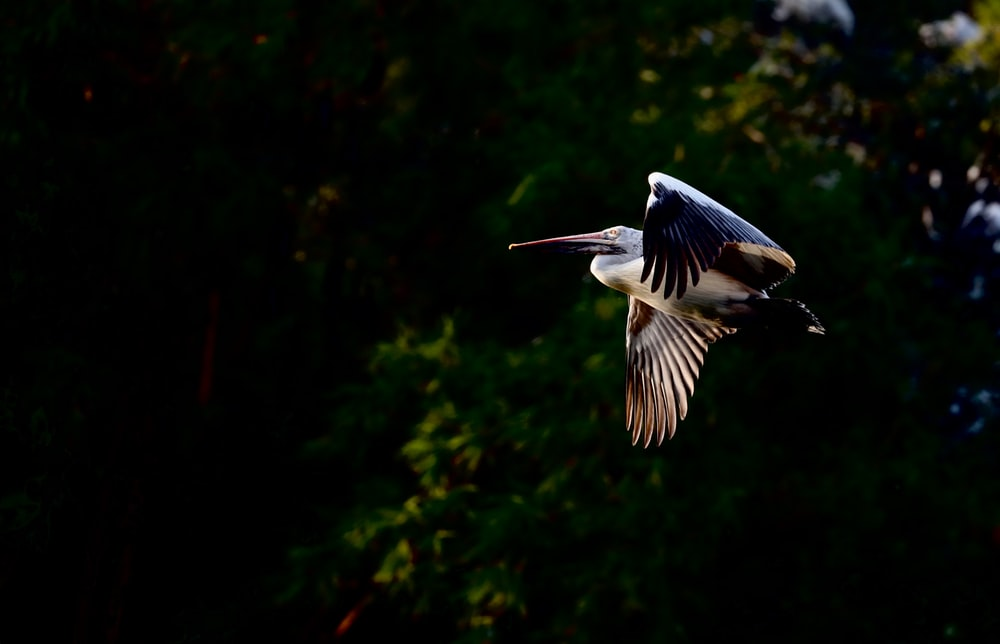 bird flying near tree outdoors