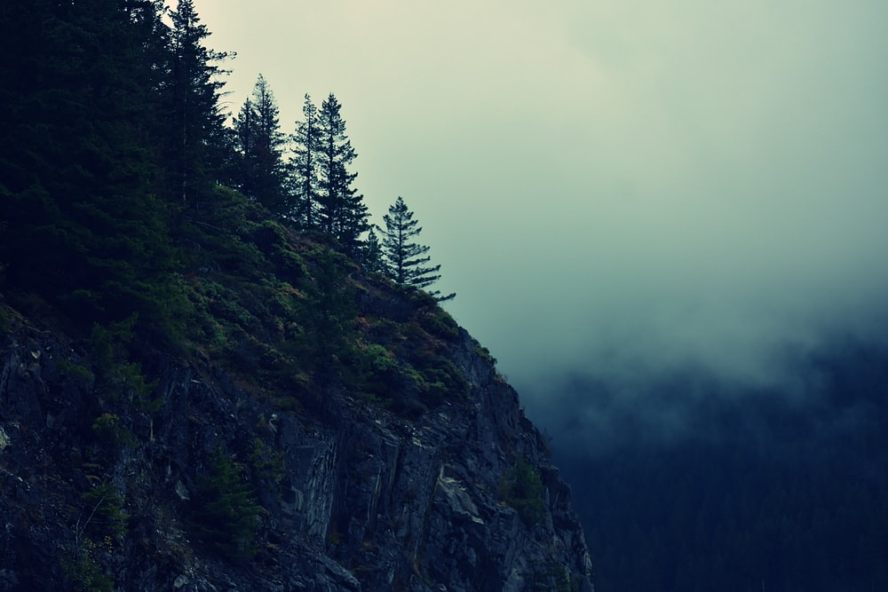 cliff with green trees surrounded by fog