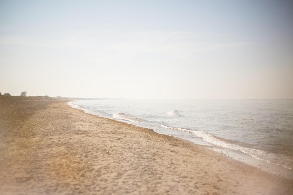beachshore during daytime
