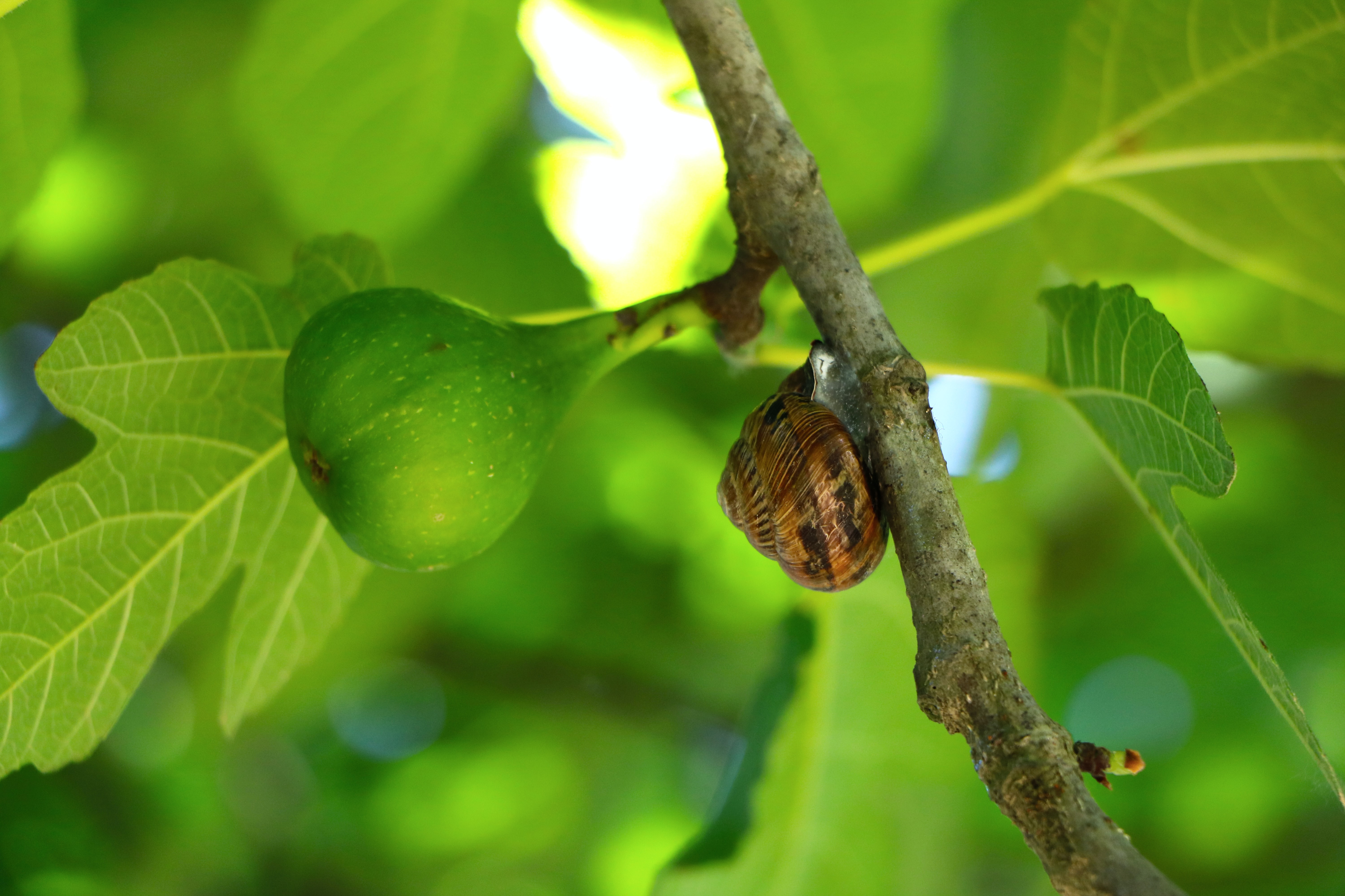 photo of brown snail on tree trunk
