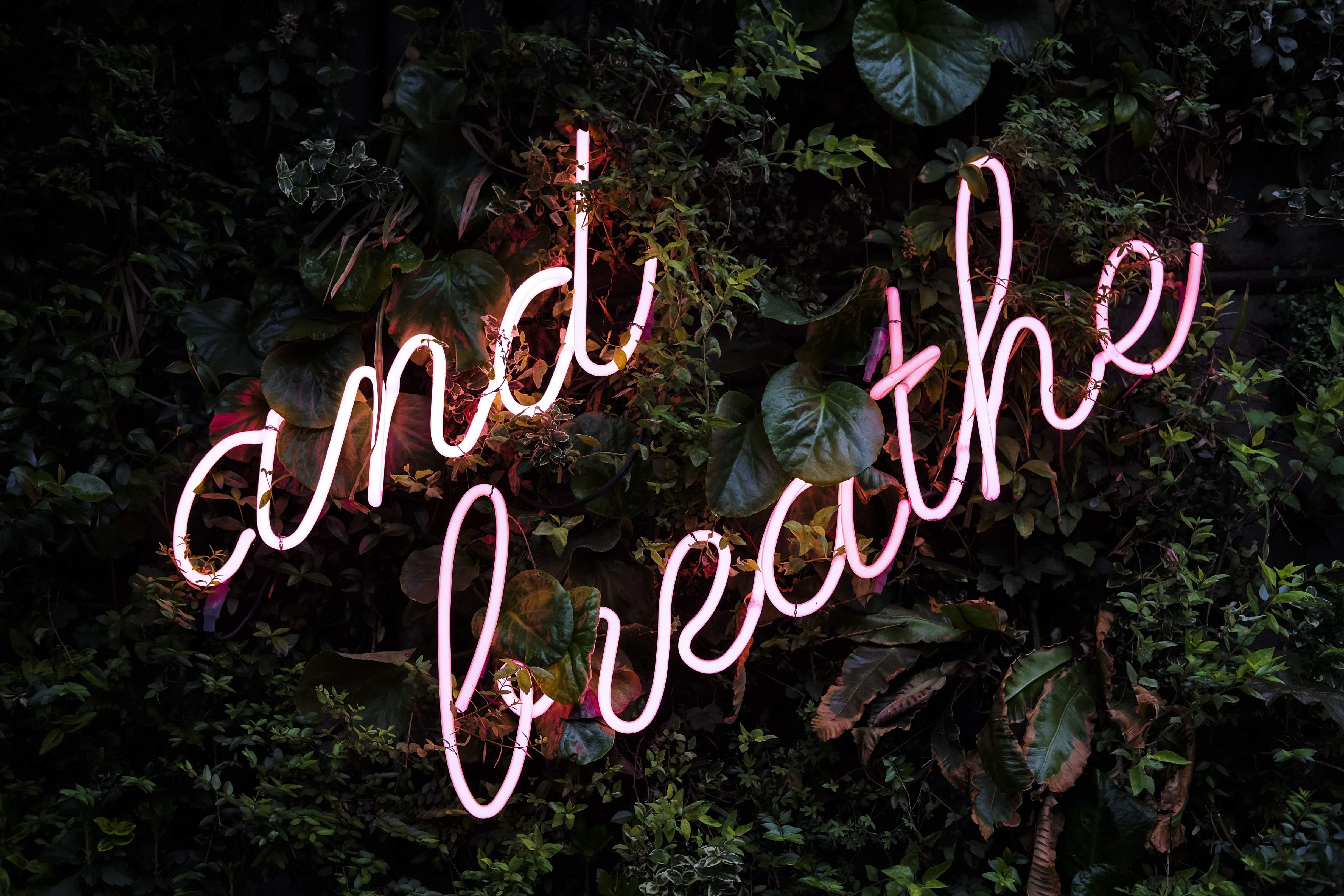 green leafed plants with and breathe neon sign