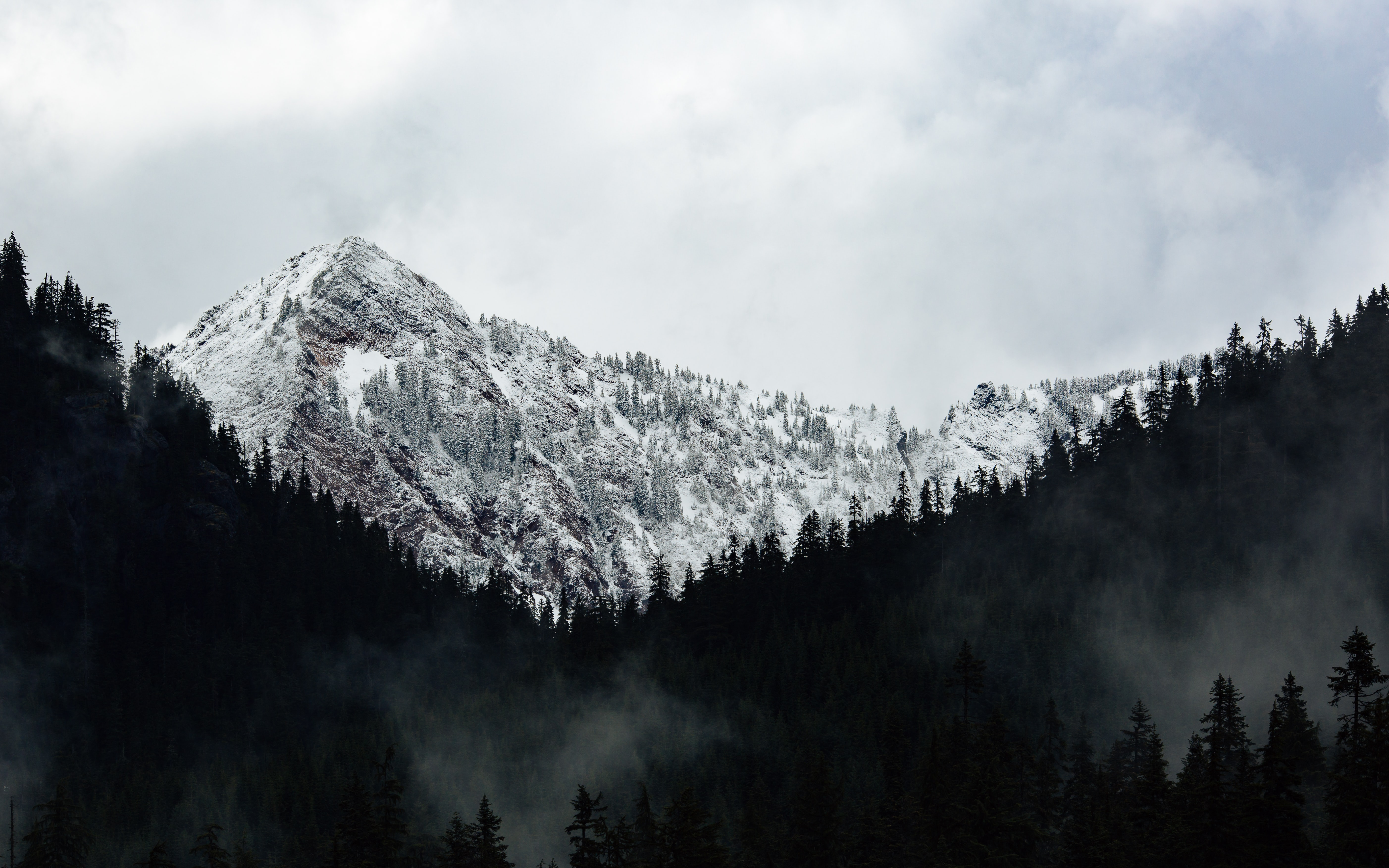 grayscale photography of trees and mountains