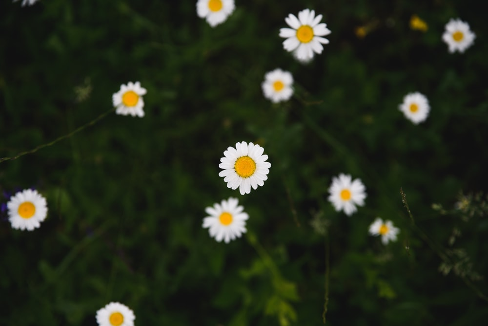 100 1080p Pictures Download Free Images On Unsplash
