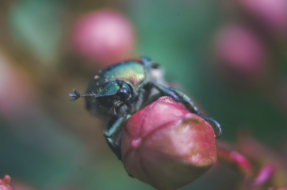 green beetle on red flower