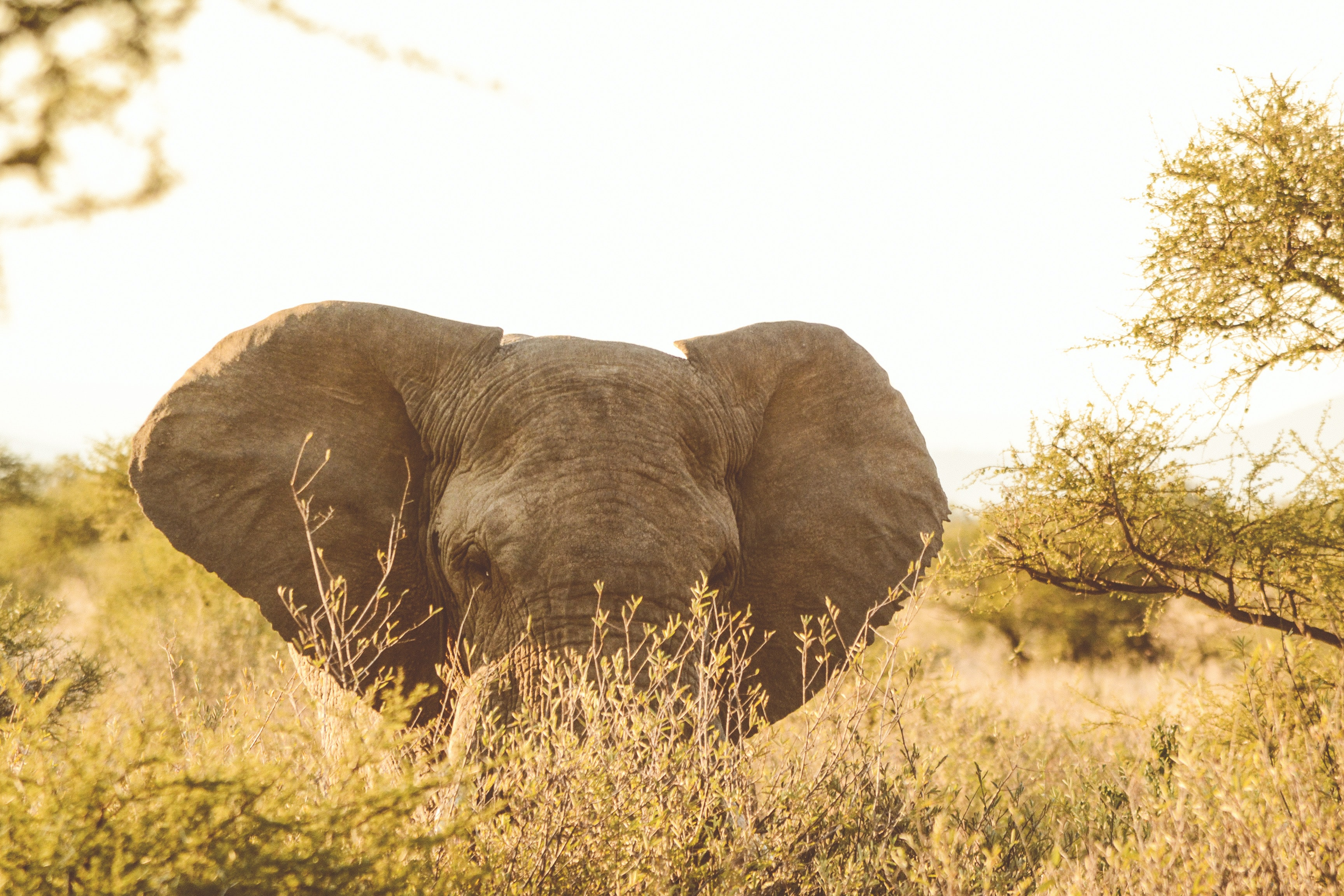 gray elephant surrounded by trees