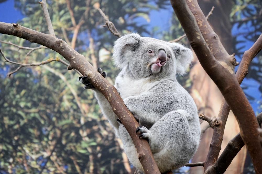 shallow focus photography of koala on tree