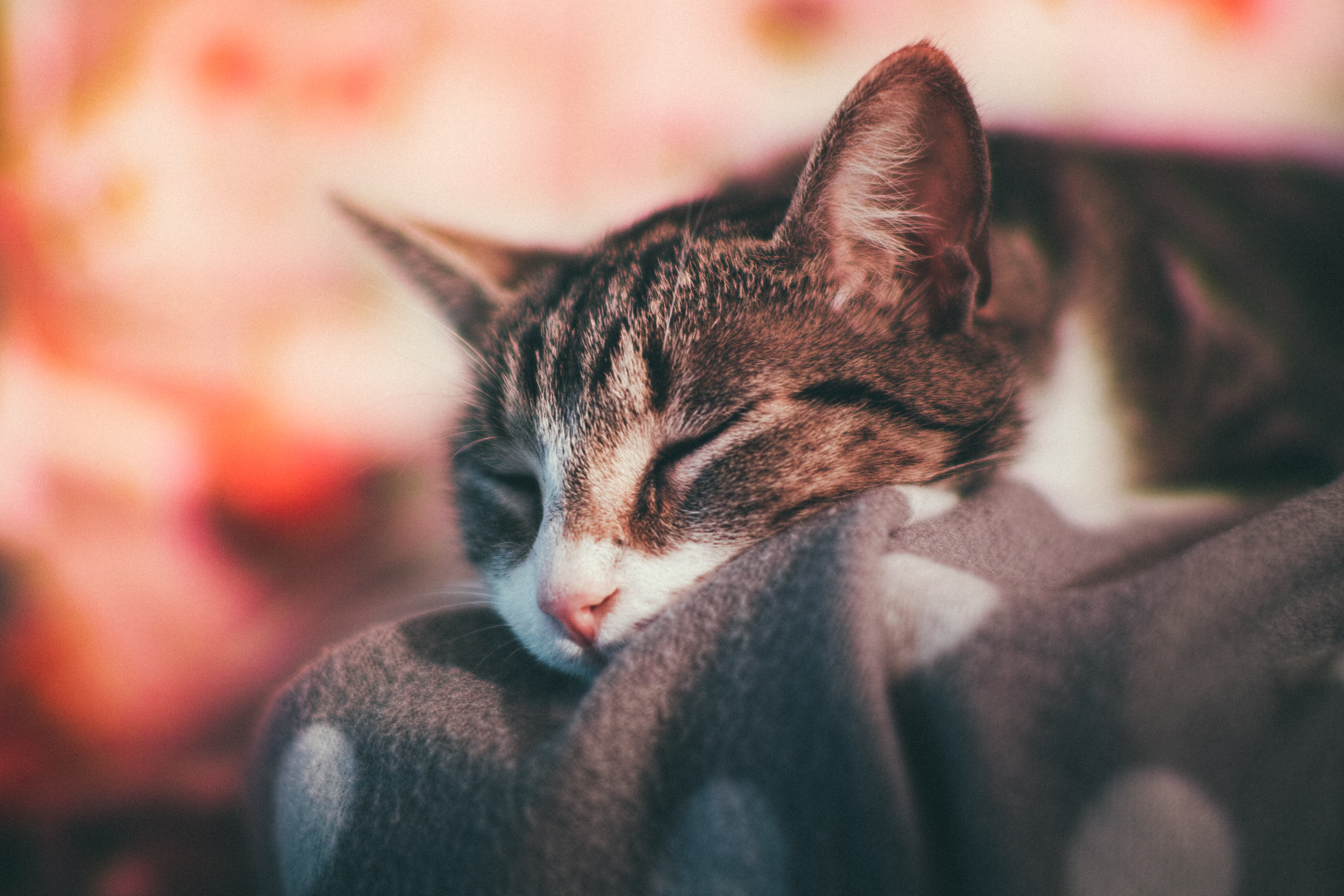 brown tabby cat on gray cloth