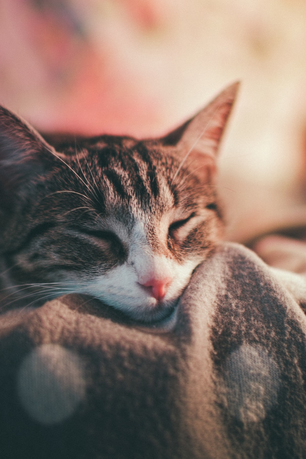 shallow focus photography of gray tabby cat sleeping on bed