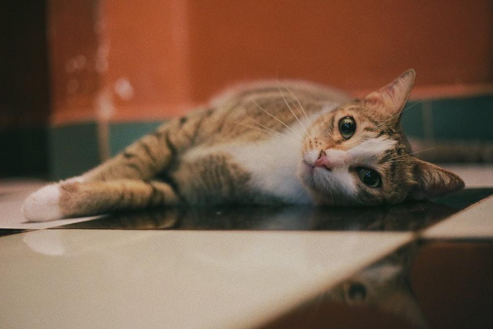 orange tabby cat lying on white and black checkered floor