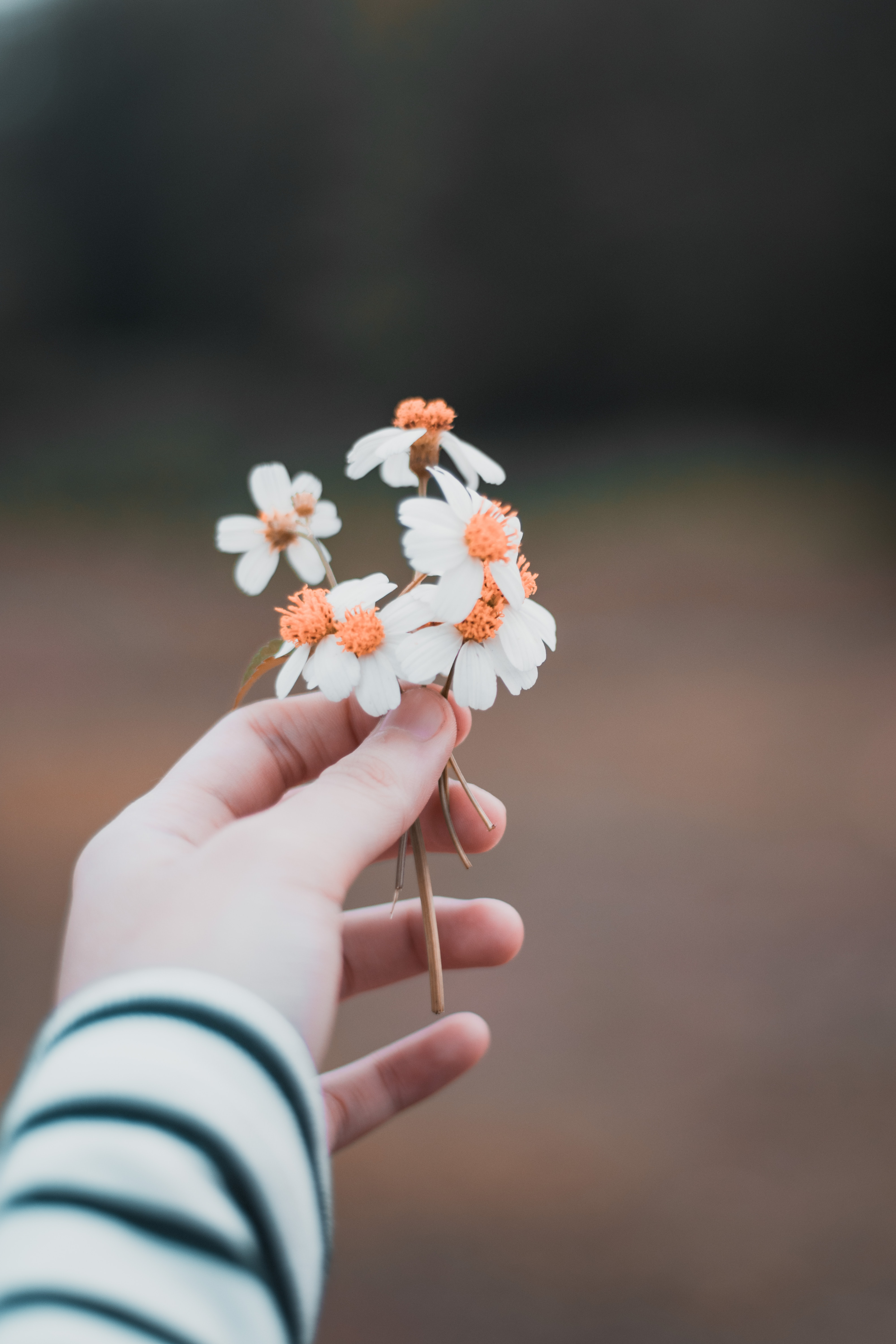 selective focus photography of person holding white petaled flowers