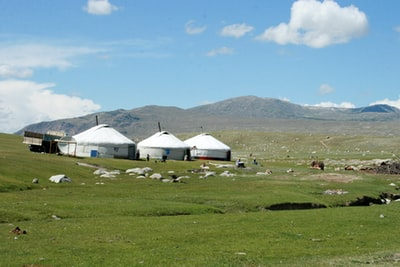 three white shed mongolia teams background