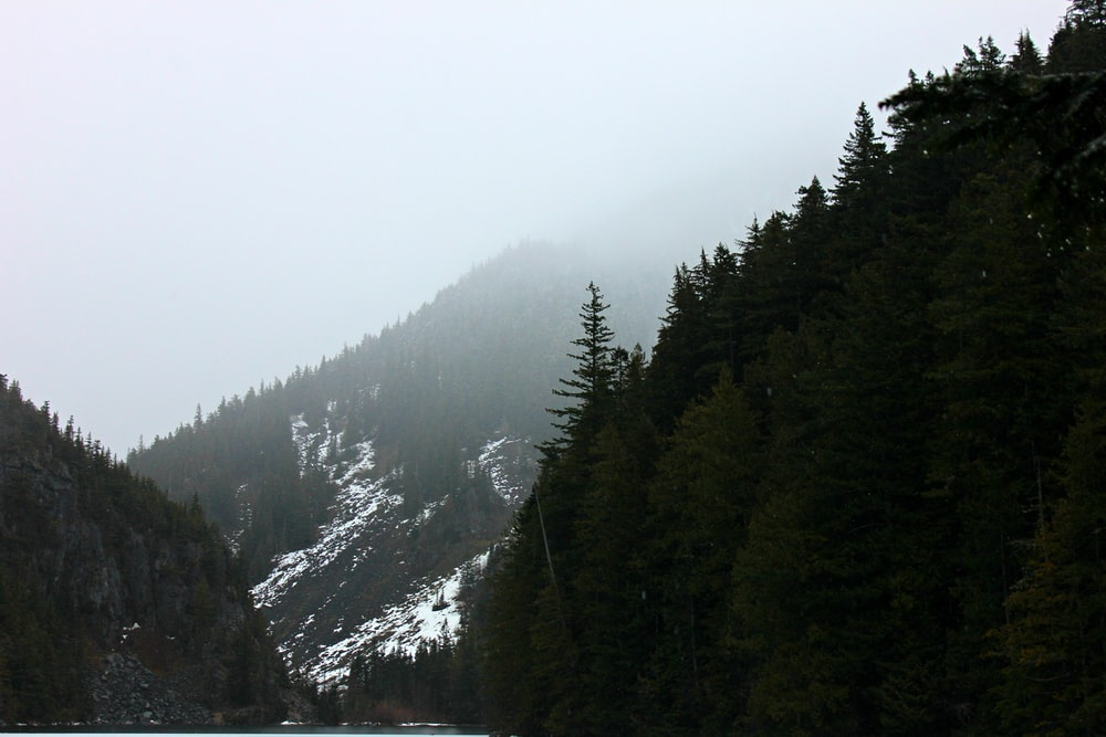 forest on mountains during daytime