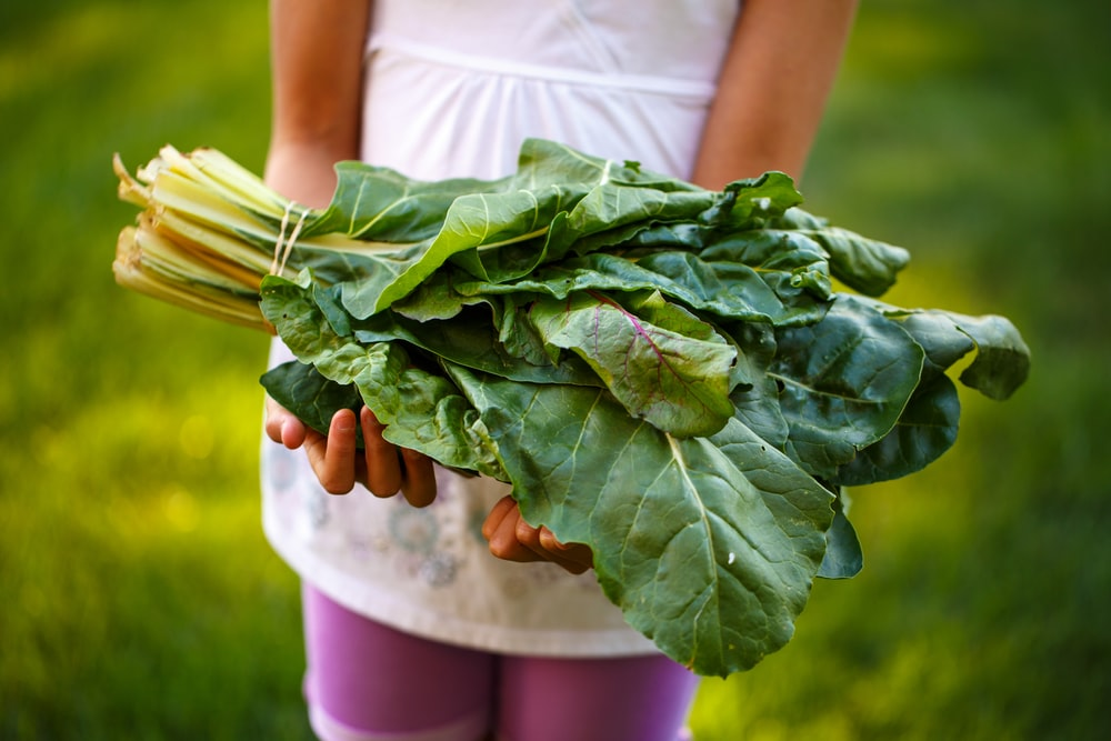 person holding bok choy