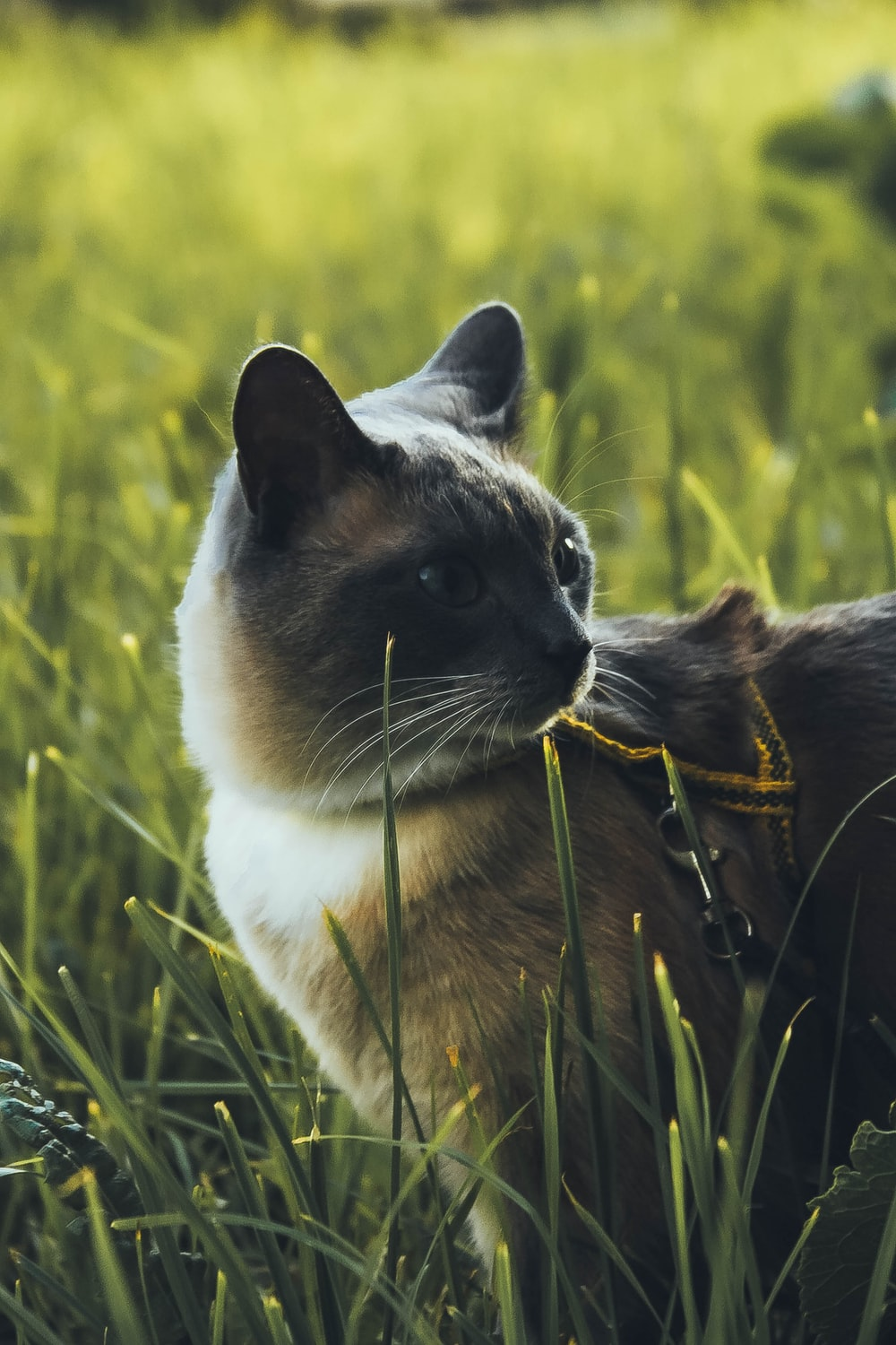 selective focus photography of short-fur brown and white cat standing on green grass field