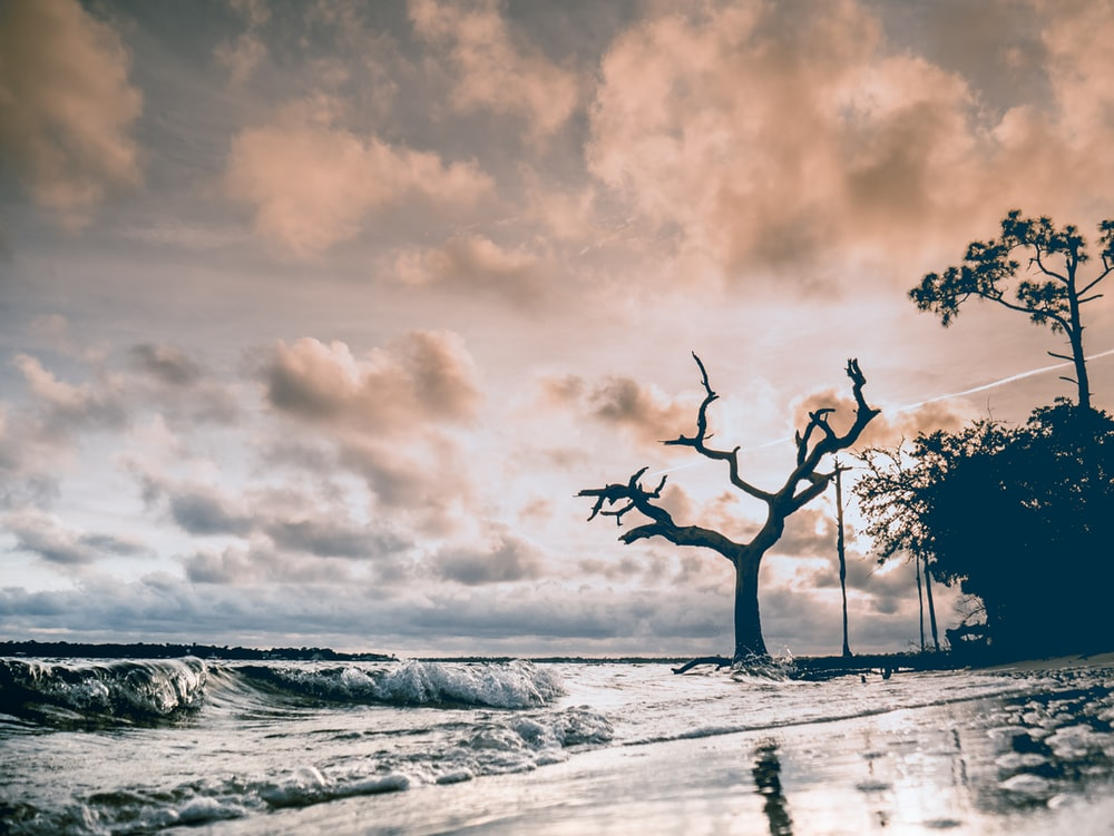 photo of trees beside body of water