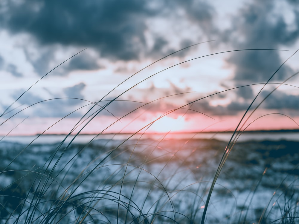 shallow focus photography of silhouette of grass