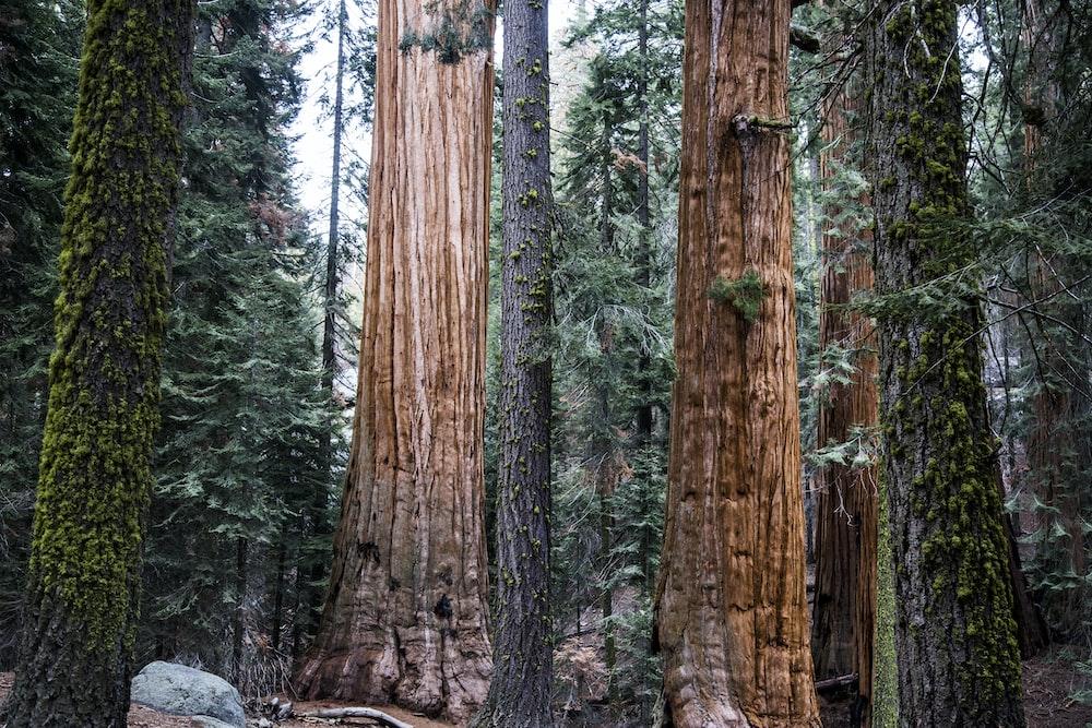 tree trunks during daytime