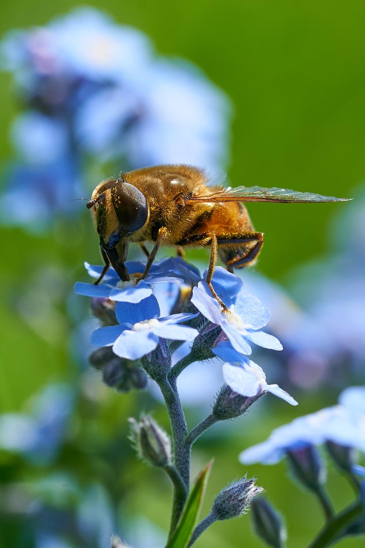 bee on blue petaled flower