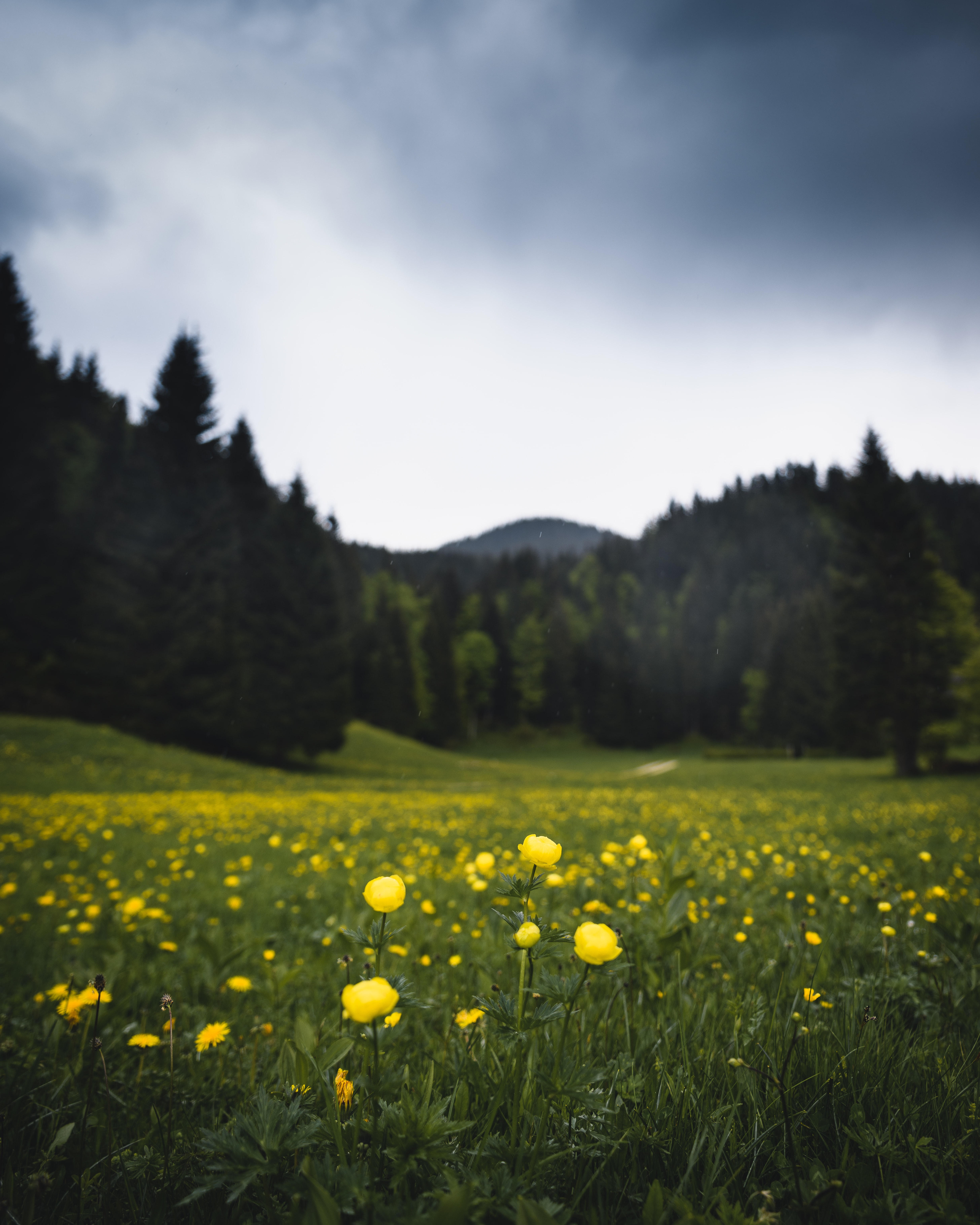 100+ flower wallpapers pictures | download free images on unsplash