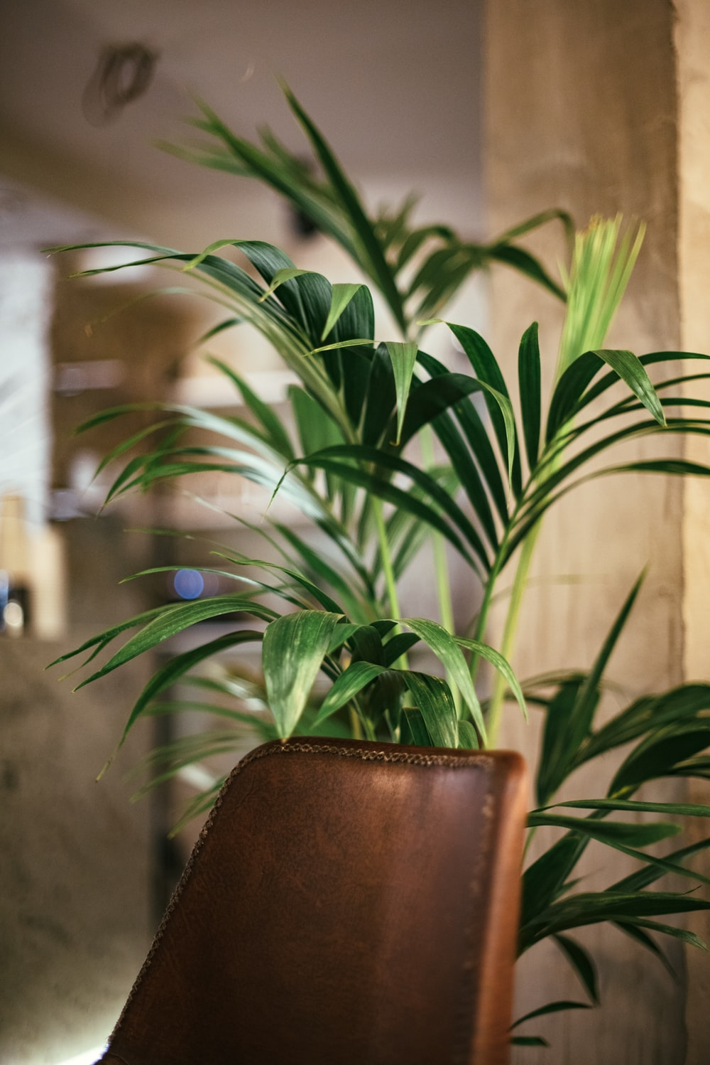 selective focus photography of linear green leafed plant