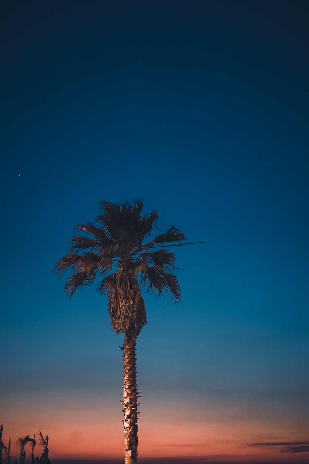 palm palm tree under blue sky during golden hour