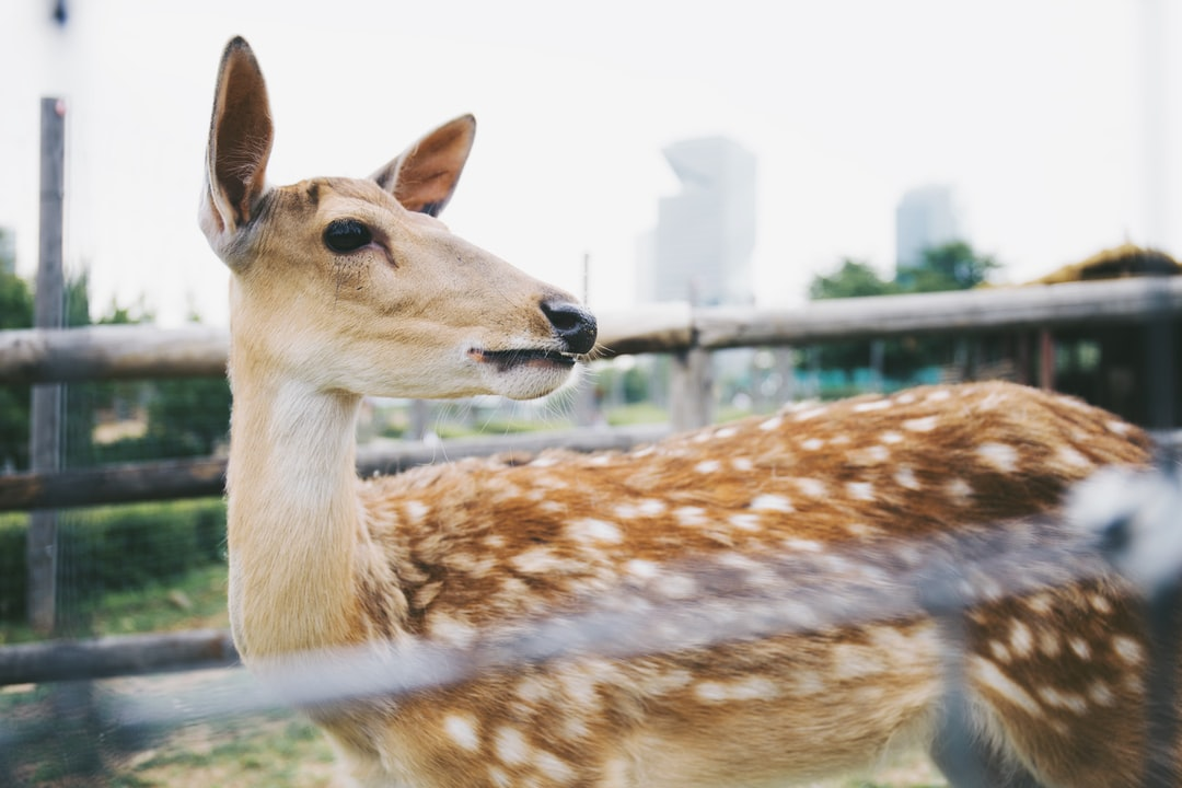 Here is the Central Park in Incheon. I followed my girlfriend to the place where she had lived before and met the lovely deer she had always said. But to me, she is the loveliest in the world.